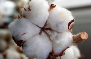 Cotton - Producing textile countries